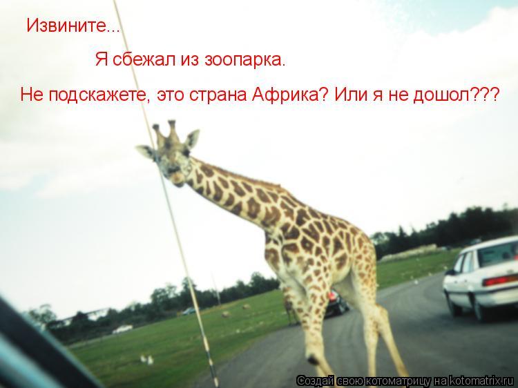 Котоматрица: Извините... Я сбежал из зоопарка. Не подскажете, это страна Африка? Или я не дошол???