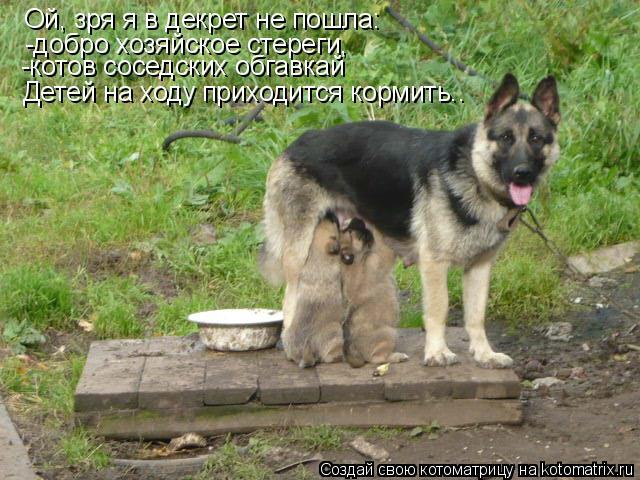Котоматрица: Ой, зря я в декрет не пошла: -добро хозяйское стереги, -котов соседских обгавкай Детей на ходу приходится кормить..
