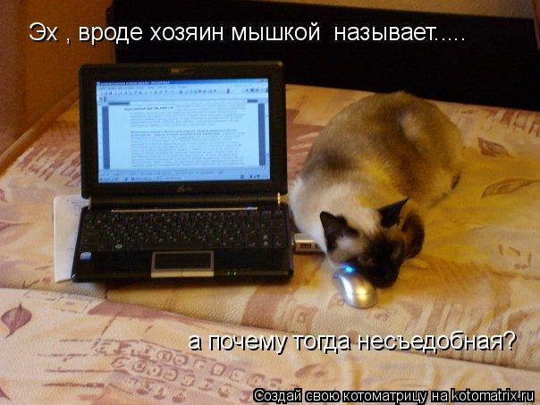 Котоматрица: Эх , вроде хозяин мышкой  называет..... а почему тогда несъедобная?