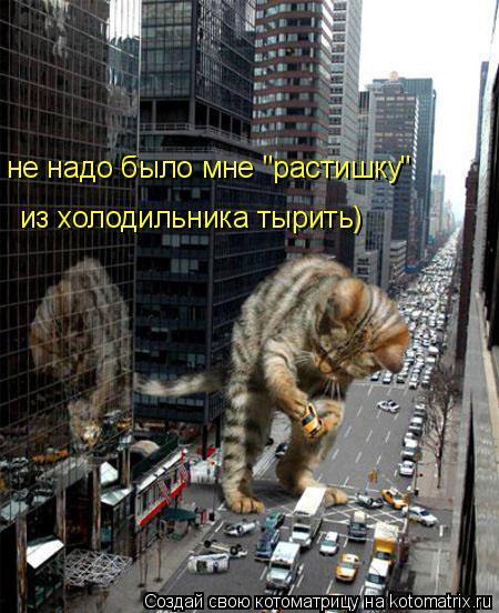 """Котоматрица: не надо было мне """"растишку"""" из холодильника тырить)"""