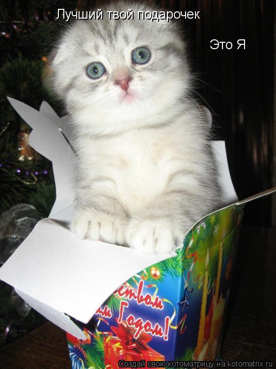 Котоматрица: Лучший твой подарочек Это Я
