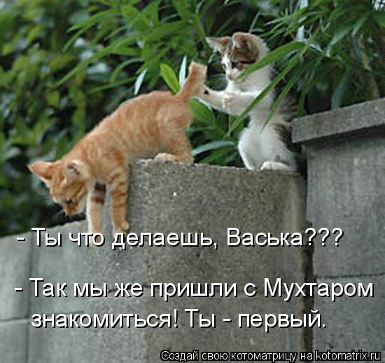 Котоматрица: - Так мы же пришли с Мухтаром  знакомиться! Ты - первый. - Ты что делаешь, Васька???