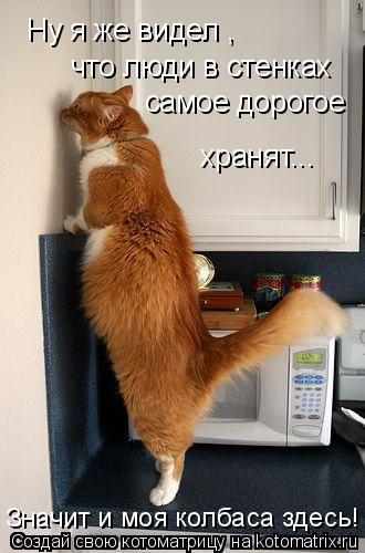 Котоматрица: Ну я же видел ,  что люди в стенках  самое дорогое хранят... Значит и моя колбаса здесь!