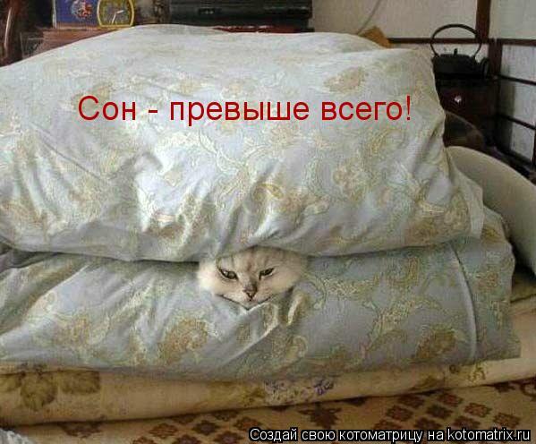 Котоматрица: Сон - превыше всего!