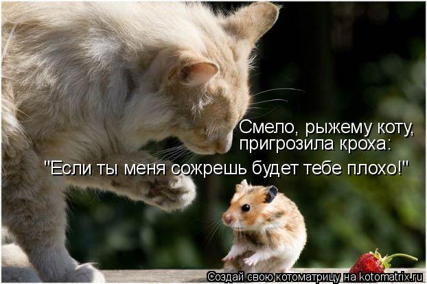 """Котоматрица: """"Если ты меня сожрешь будет тебе плохо!"""" Смело, рыжему коту, пригрозила кроха:"""