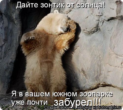 Котоматрица: Дайте зонтик от солнца!  Я в вашем южном зоопарке  уже почти  забурел!!!