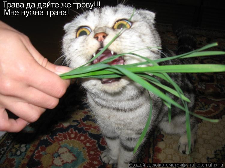 Котоматрица: Трава да дайте же трову!!! Мне нужна трава!