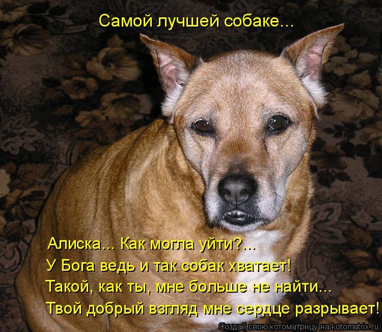 Котоматрица: Алиска... Как могла уйти?... У Бога ведь и так собак хватает! Такой, как ты, мне больше не найти... Самой лучшей собаке... Твой добрый взгляд мне се