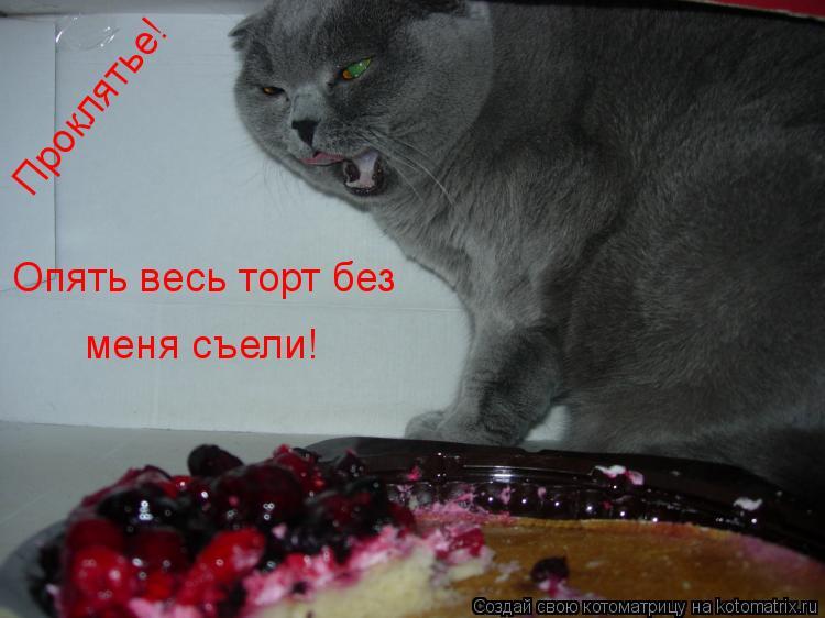 Котоматрица: Опять весь торт без  меня съели! Проклятье!