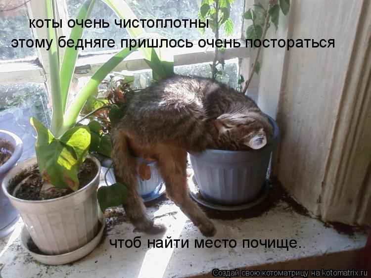 Котоматрица: коты очень чистоплотны этому бедняге пришлось очень постораться чтоб найти место почище.