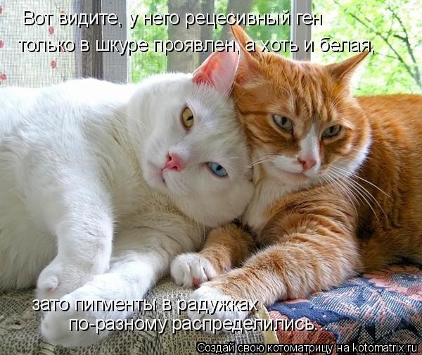 Котоматрица: Вот видите, у него рецесивный ген только в шкуре проявлен, а хоть и белая, зато пигменты в радужках  по-разному распределились...