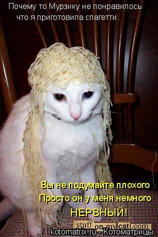 Котоматрица: Почему то Мурзику не понравилось Вы не подумайте плохого Просто он у меня немного НЕРВНЫЙ! что я приготовила спагетти.