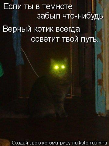 Котоматрица: Если ты в темноте  забыл что-нибудь Верный котик всегда  осветит твой путь..