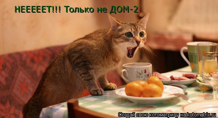 Котоматрица: НЕЕЕЕЕТ!!! Только не ДОМ-2