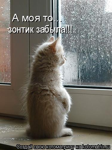 Котоматрица: А моя то... зонтик забыла!!!
