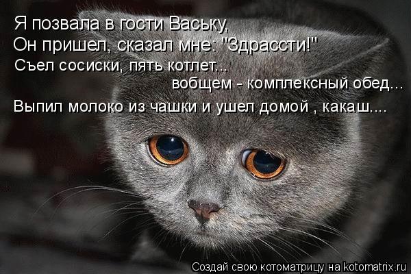 """Котоматрица: Я позвала в гости Ваську, Он пришел, сказал мне: """"Здрассти!"""" Съел сосиски, пять котлет... вобщем - комплексный обед... Выпил молоко из чашки и уше"""