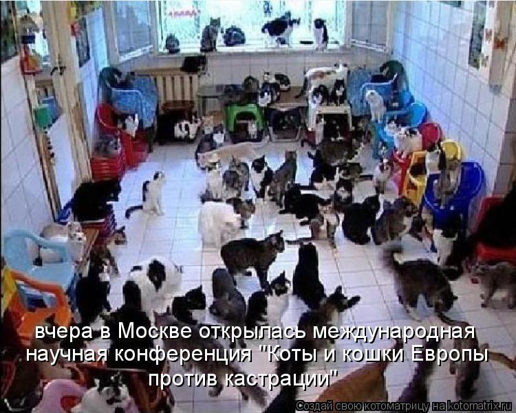 """Котоматрица: вчера в Москве открылась международная  научная конференция """"Коты и кошки Европы  против кастрации"""""""