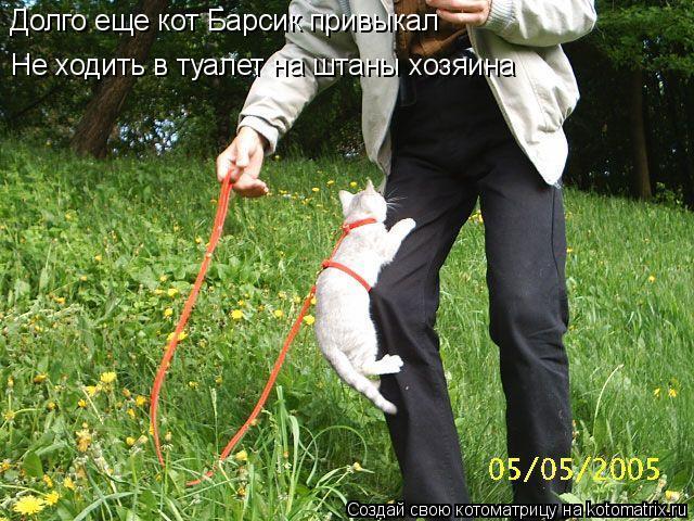 Котоматрица: Не ходить в туалет на штаны хозяина Долго еще кот Барсик привыкал