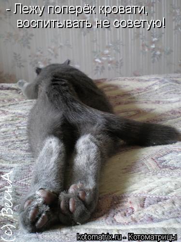 Котоматрица: - Лежу поперёк кровати, воспитывать не советую!