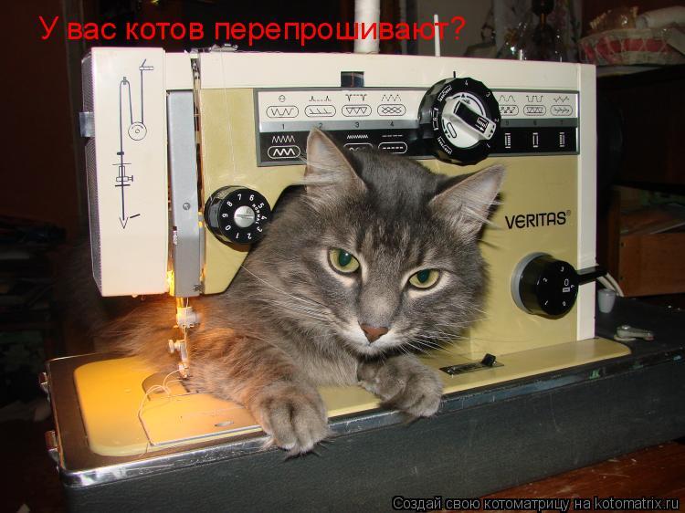 Котоматрица: У вас котов перепрошивают?