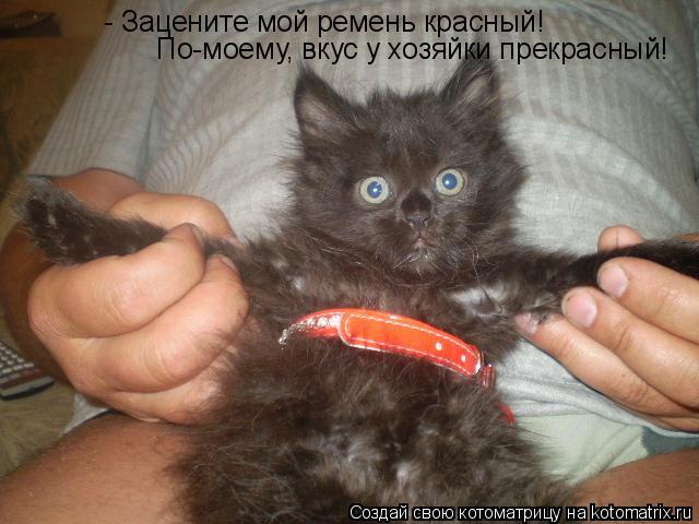 Котоматрица: - Зацените мой ремень красный! По-моему, вкус у хозяйки прекрасный!