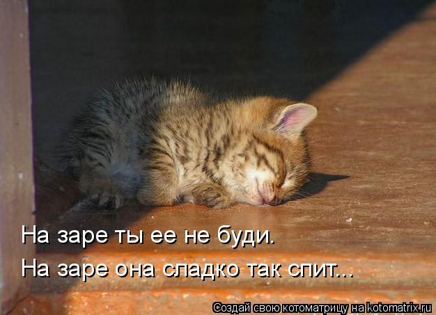 Котоматрица: На заре ты ее не буди. На заре она сладко так спит...
