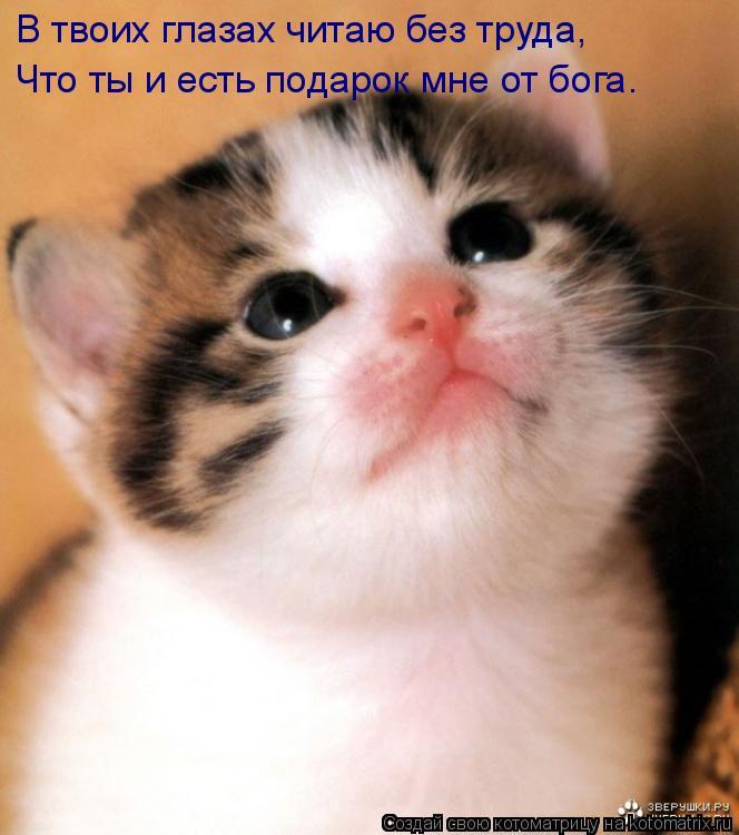 Котоматрица: В твоих глазах читаю без труда, Что ты и есть подарок мне от бога.