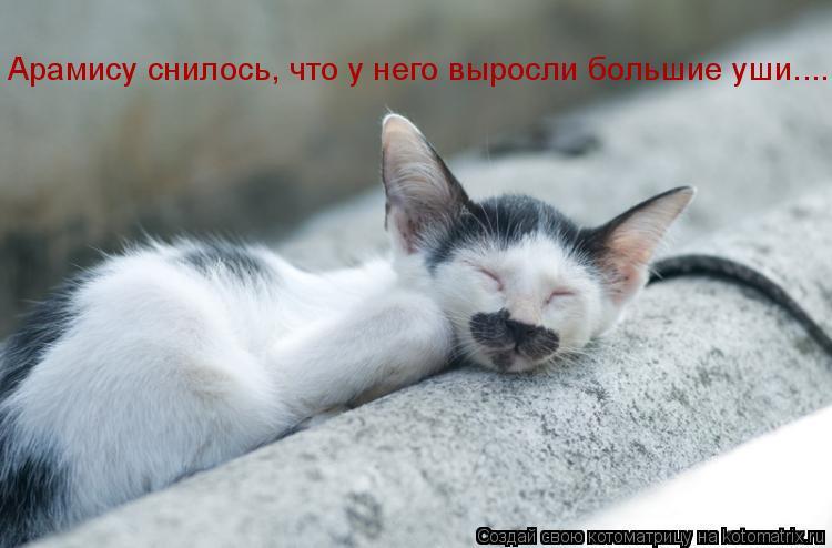 Котоматрица: Арамису снилось, что у него выросли большие уши....