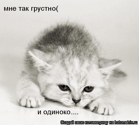 Котоматрица: мне так грустно( и одиноко....
