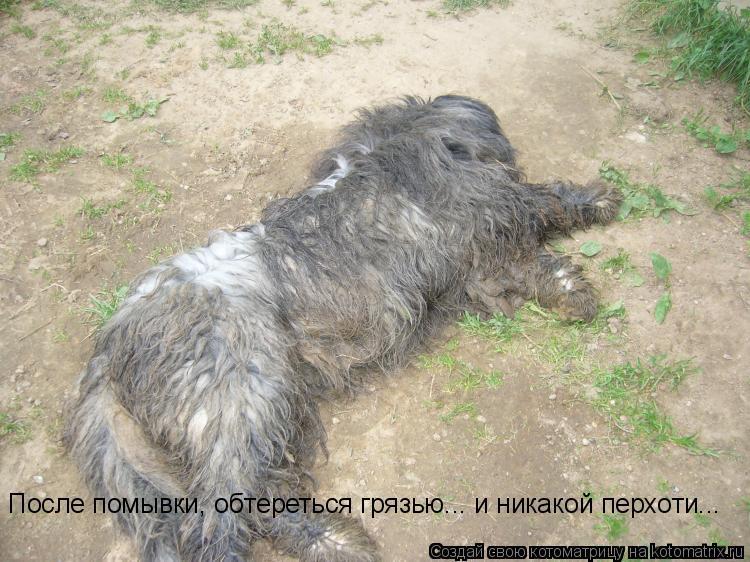 Котоматрица: После помывки, обтереться грязью... и никакой перхоти...