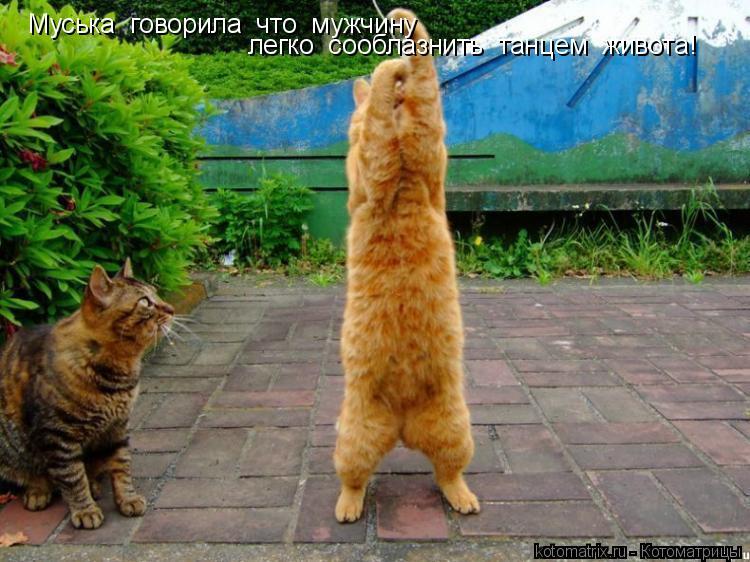 Котоматрица: Муська  говорила  что  мужчину легко  сооблазнить  танцем  живота!