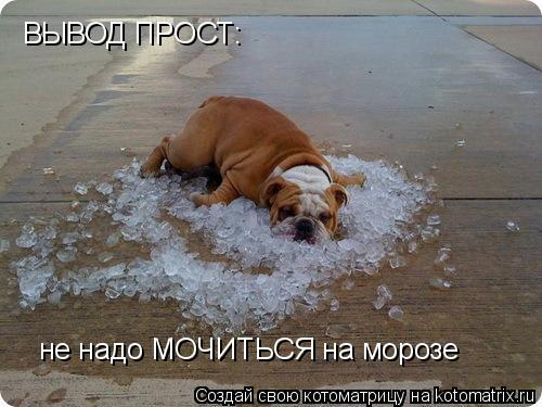 Котоматрица: ВЫВОД ПРОСТ: не надо МОЧИТЬСЯ на морозе