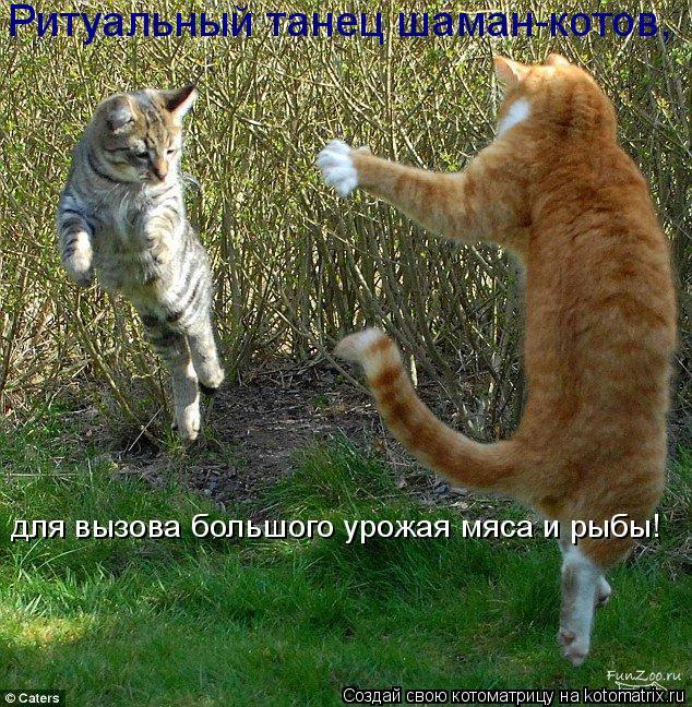 Котоматрица: для вызова большого урожая мяса и рыбы! Ритуальный танец шаман-котов,