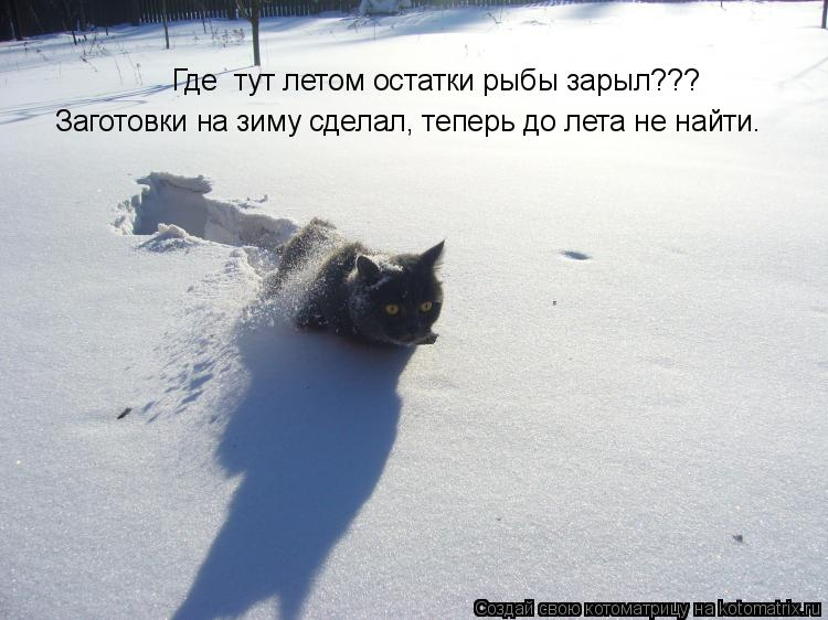 Котоматрица: Заготовки на зиму сделал, теперь до лета не найти. Где  тут летом остатки рыбы зарыл???