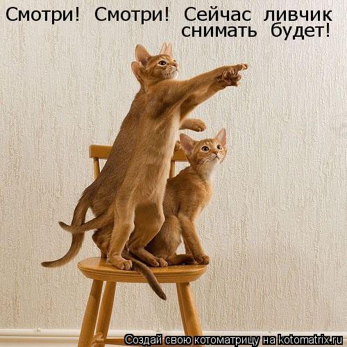 Котоматрица: Смотри!  Смотри!  Сейчас  ливчик   снимать  будет!