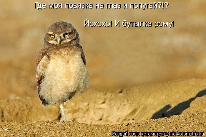 Котоматрица: Где моя повязка на глаз и попугай?!? Йохохо! И бутылка рому!