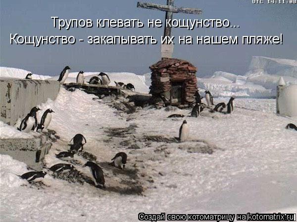 Котоматрица: Трупов клевать не кощунство... Кощунство - закапывать их на нашем пляже!