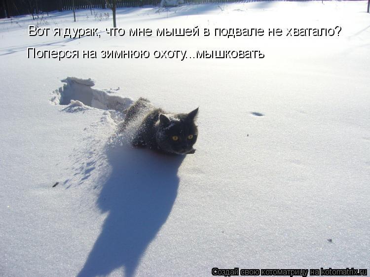 Котоматрица: Вот я дурак, что мне мышей в подвале не хватало? Поперся на зимнюю охоту...мышковать