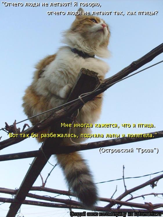 """Котоматрица: Мне иногда кажется, что я птица.  (Островский """"Гроза"""") """"Отчего люди не летают! Я говорю,  отчего люди не летают так, как птицы?  Вот так бы разбеж"""