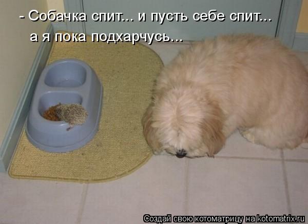 Котоматрица: - Собачка спит... и пусть себе спит... а я пока подхарчусь...