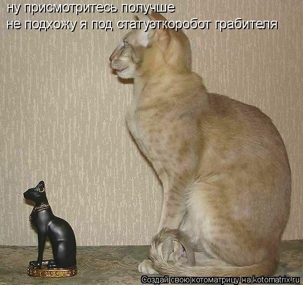 Котоматрица: ну присмотритесь получше не подхожу я под статуэткоробот грабителя