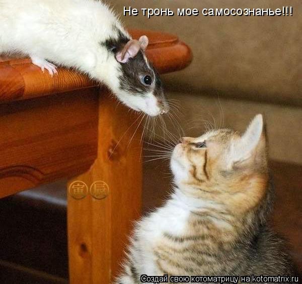Котоматрица: Не тронь мое самосознанье!!!