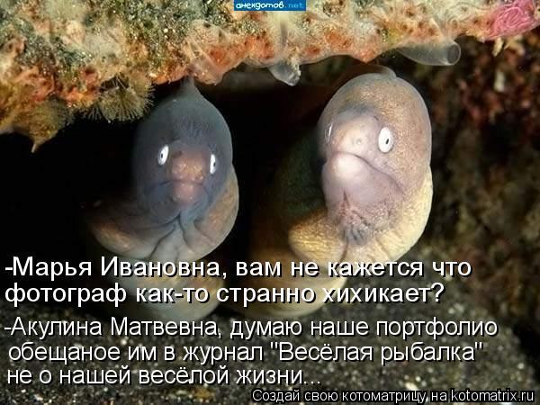 """Котоматрица: -Марья Ивановна, вам не кажется что фотограф как-то странно хихикает? -Акулина Матвевна, думаю наше портфолио обещаное им в журнал """"Весёлая р"""