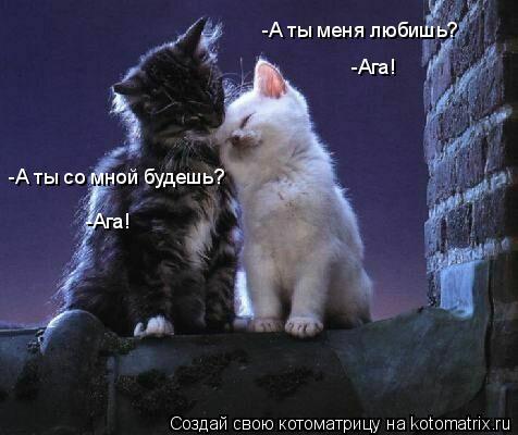 Котоматрица: -А ты меня любишь? -А ты со мной будешь? -Ага! -Ага!