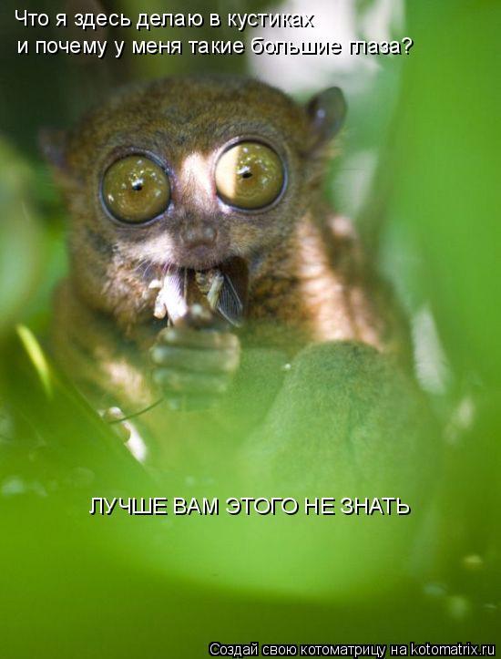 Котоматрица: Что я здесь делаю в кустиках и почему у меня такие большие глаза? ЛУЧШЕ ВАМ ЭТОГО НЕ ЗНАТЬ