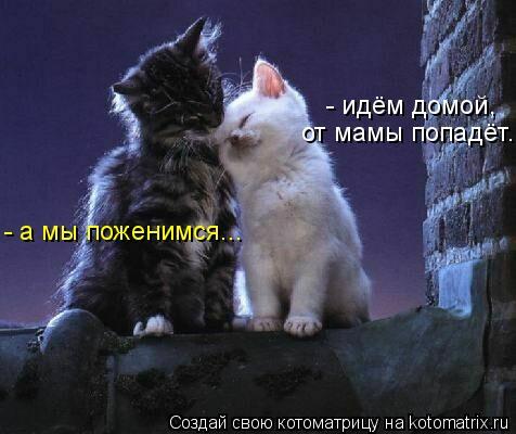 Котоматрица: - идём домой,  от мамы попадёт... - а мы поженимся...