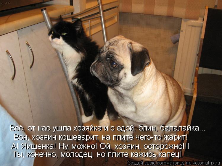 Котоматрица: Всё, от нас ушла хозяйка и с едой, блин, балалайка... Вон, хозяин кошеварит, на плите чего-то жарит! А! Яишенка! Ну, можно! Ой, хозяин, осторожно!!!