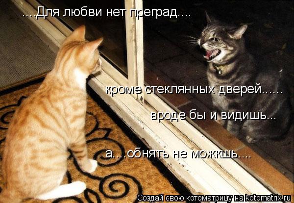 Котоматрица: ....Для любви нет преград.... кроме стеклянных дверей...... вроде бы и видишь. .. а....обнять не можкшь....