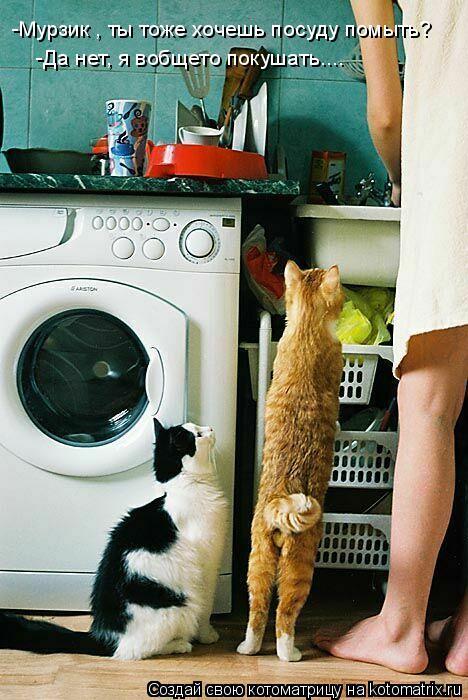Котоматрица: -Мурзик , ты тоже хочешь посуду помыть? -Да нет, я вобщето покушать....