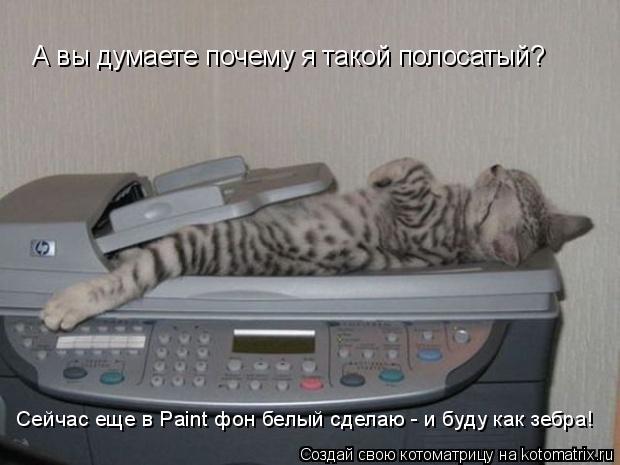 Котоматрица: А вы думаете почему я такой полосатый? Сейчас еще в Paint фон белый сделаю - и буду как зебра!
